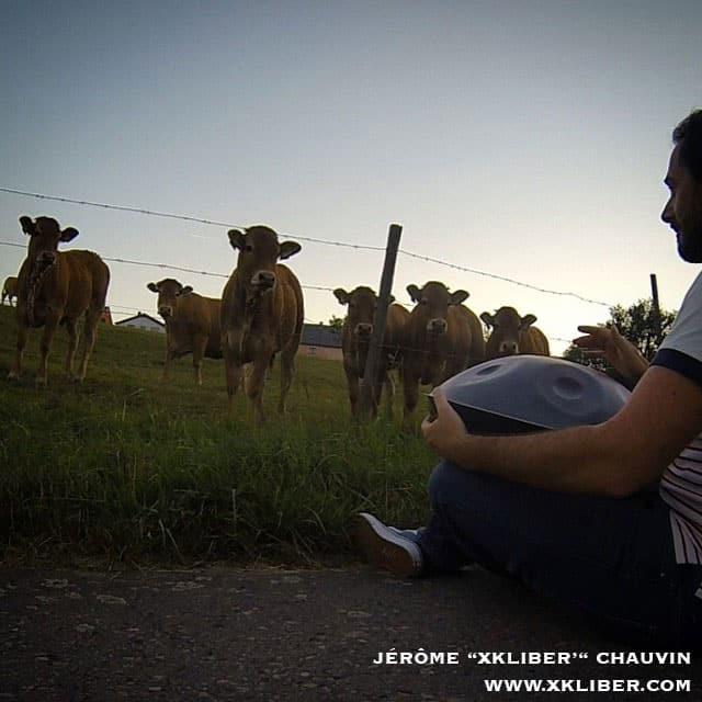 Cows listening to Jérôme xkliber playing the handpan