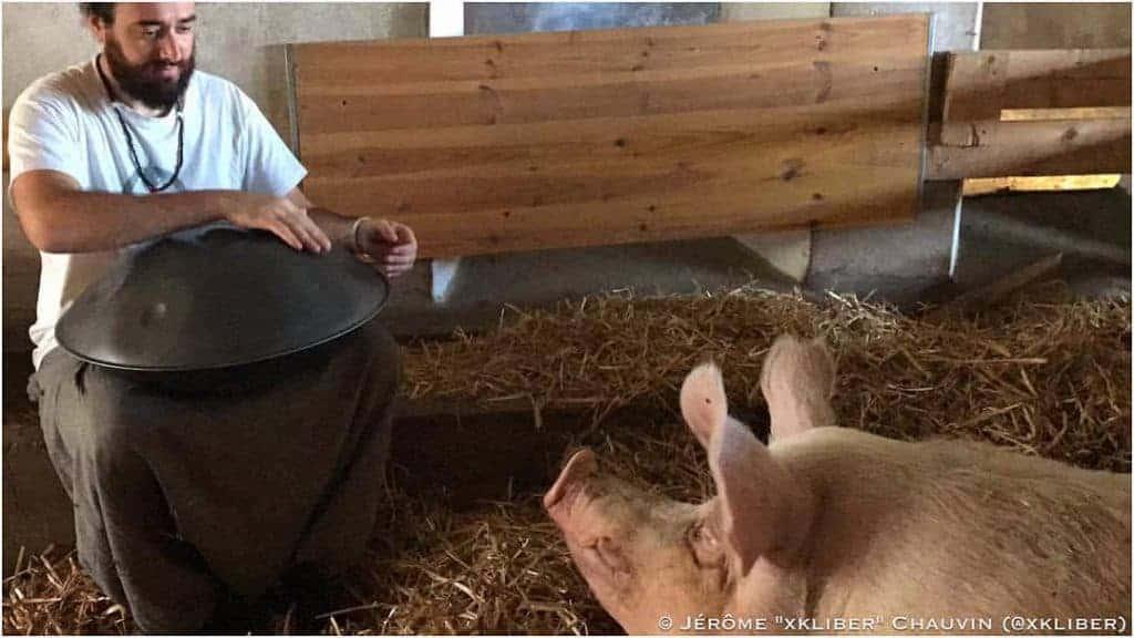 Jérôme xkliber spielt Handpan für ein Schwein